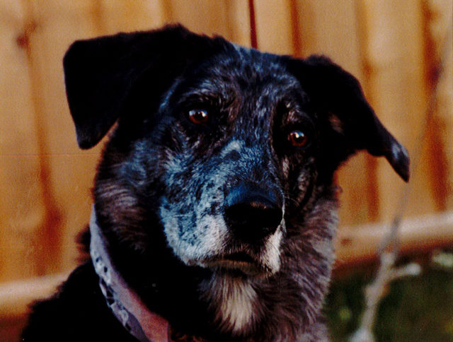 A Vancouver dog named Jinx in The Two Gentlemen of Verona (2001)